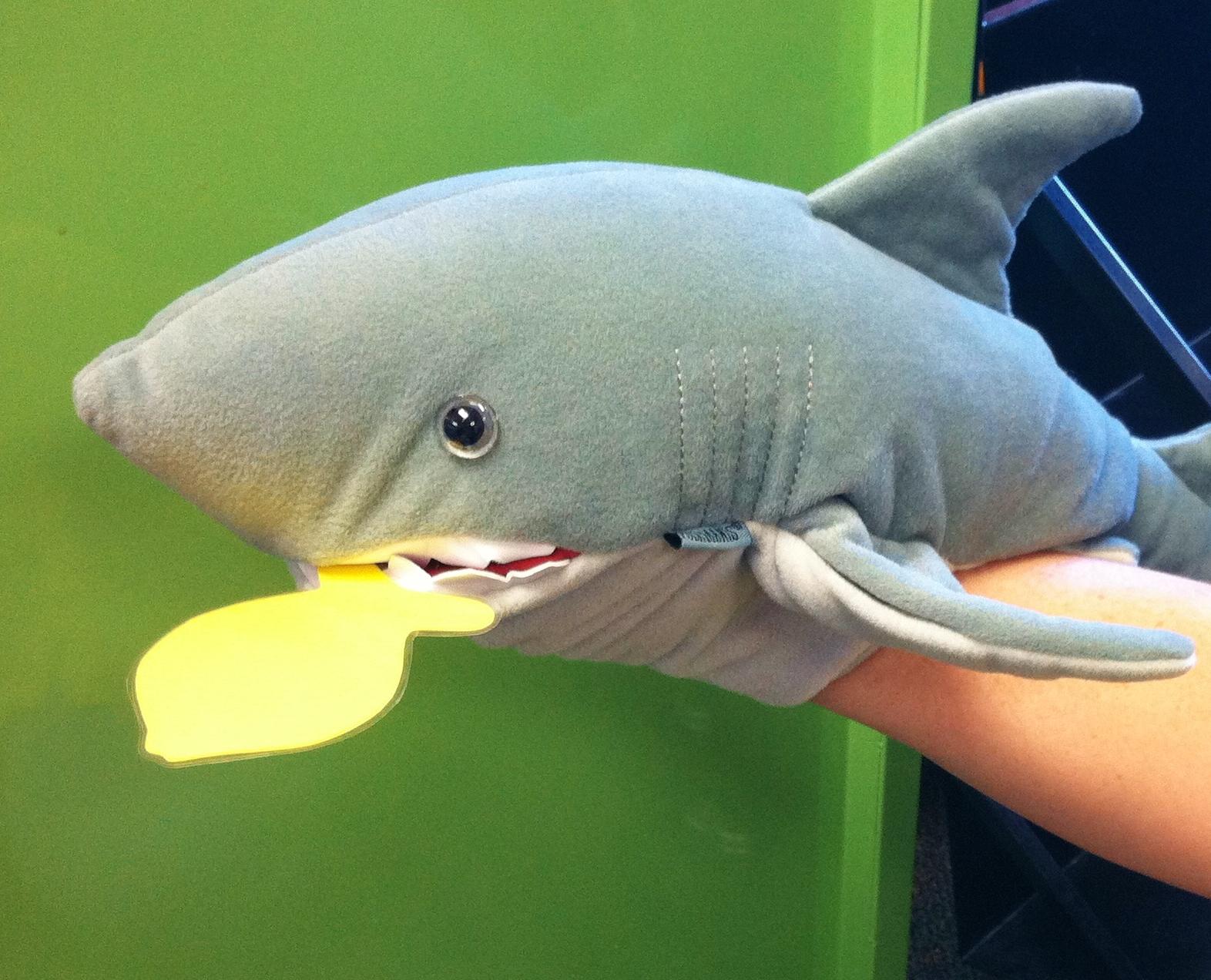 shark week sunflower storytime